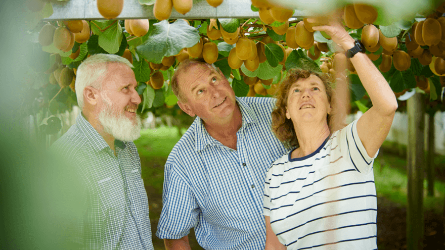 No standing still for kiwifruit growing family