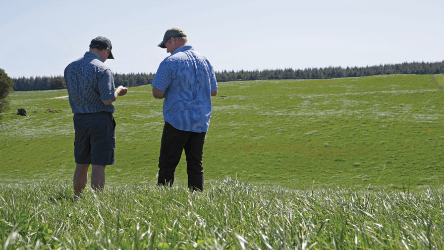 A 'how to' guide to pasture renewal