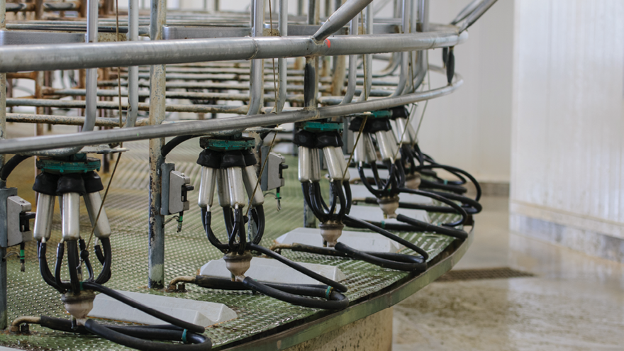 Watch out for thermoduric bacteria risk in dairy sheds