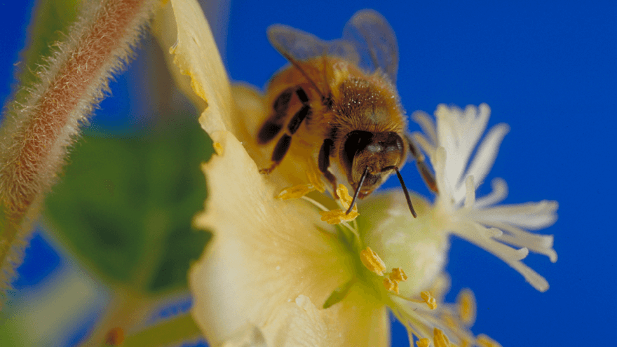 Operation Pollinator and enhancing plant diversity