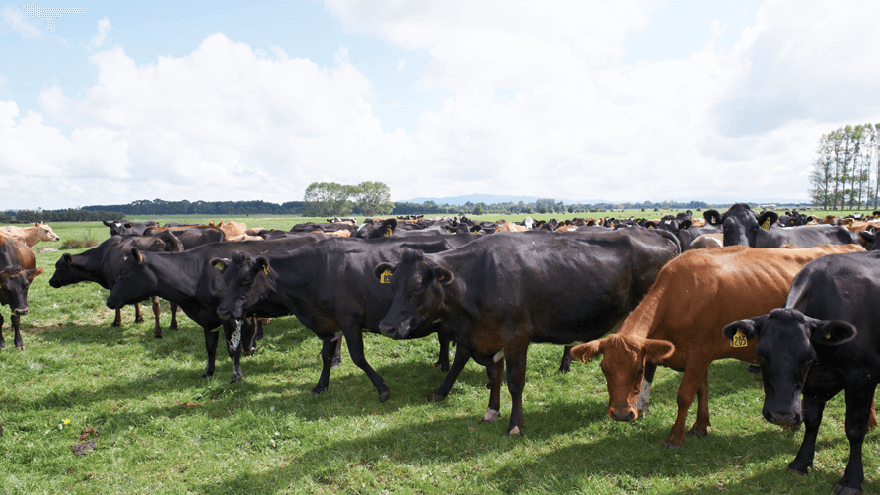 Providing nutritional support for cows during heat stress conditions