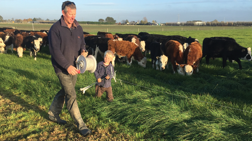 Introduction of milk replacer to calf rearing