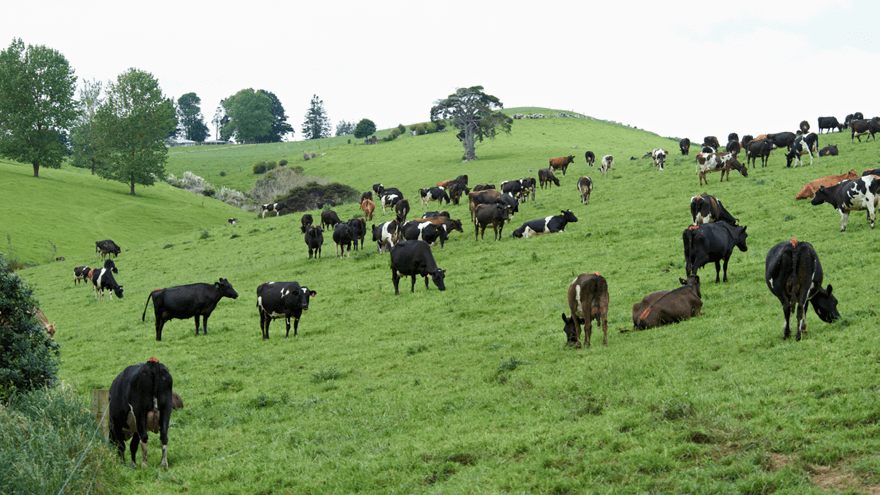 The importance of macrominerals for the milking cow