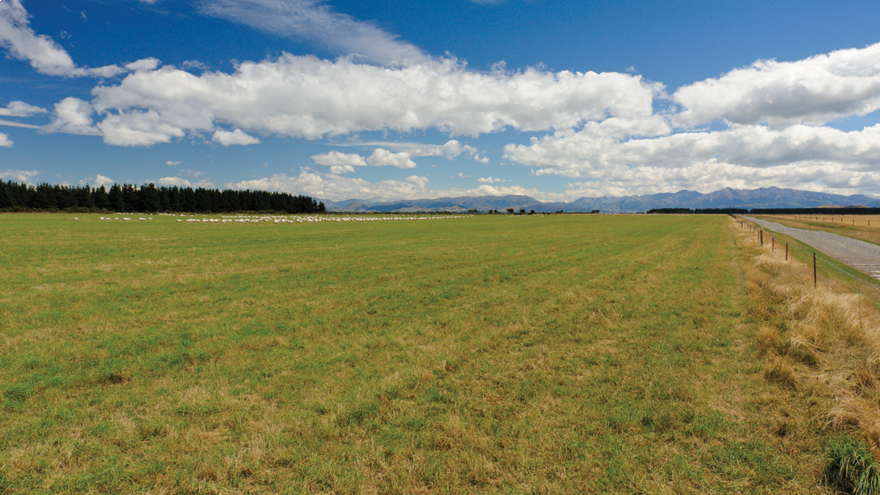 New pasture and the first graze