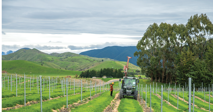 New vineyard integrated into farming operation