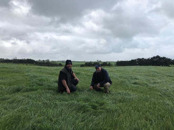 New high performance and late heading perennial ryegrass