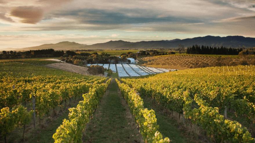 Winemakers embrace sustainability