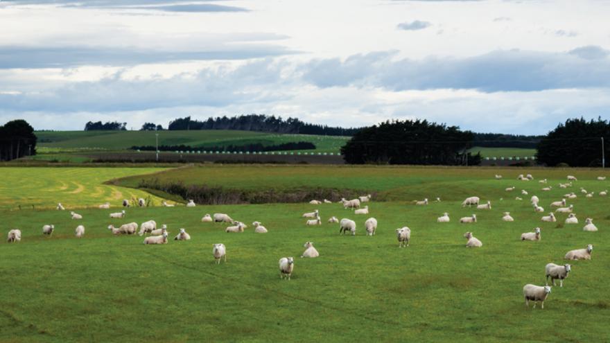 Managing ewes through Winter