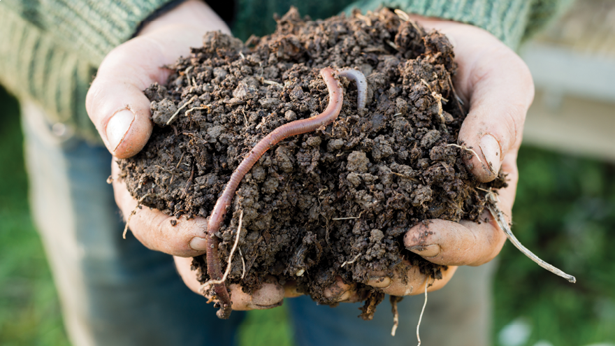 The importance of earthworms for soil health