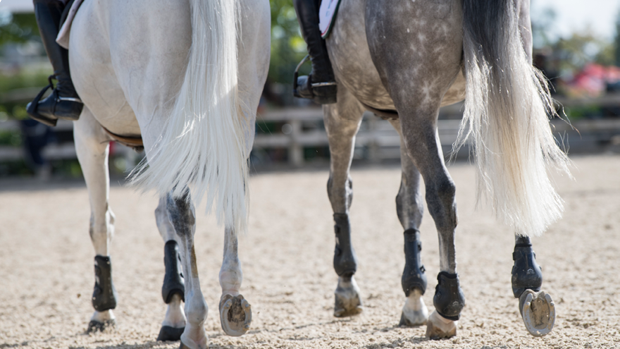 Travelling your horse: Top Tips