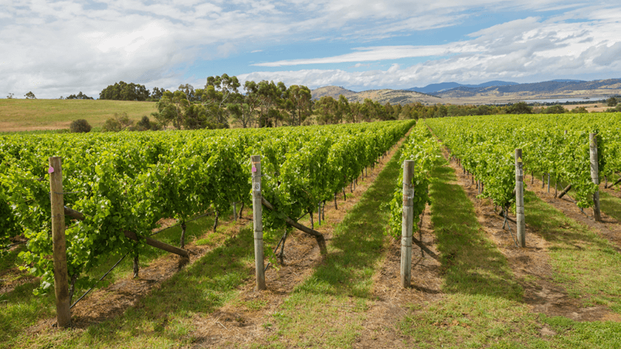 Tackling grape diseases and pests with renewed confidence