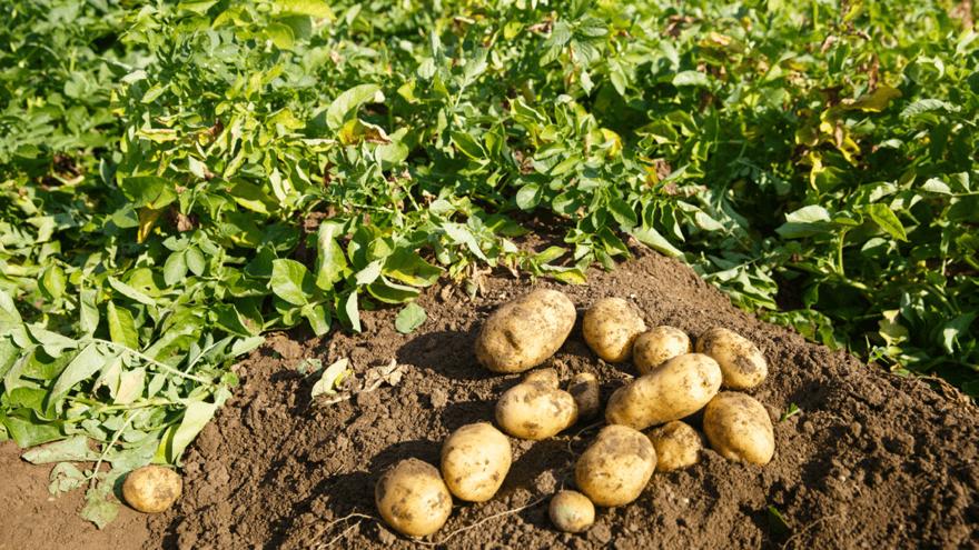 Vegetable pests surge in spring