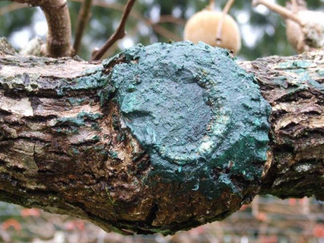 Protecting your pruning wounds