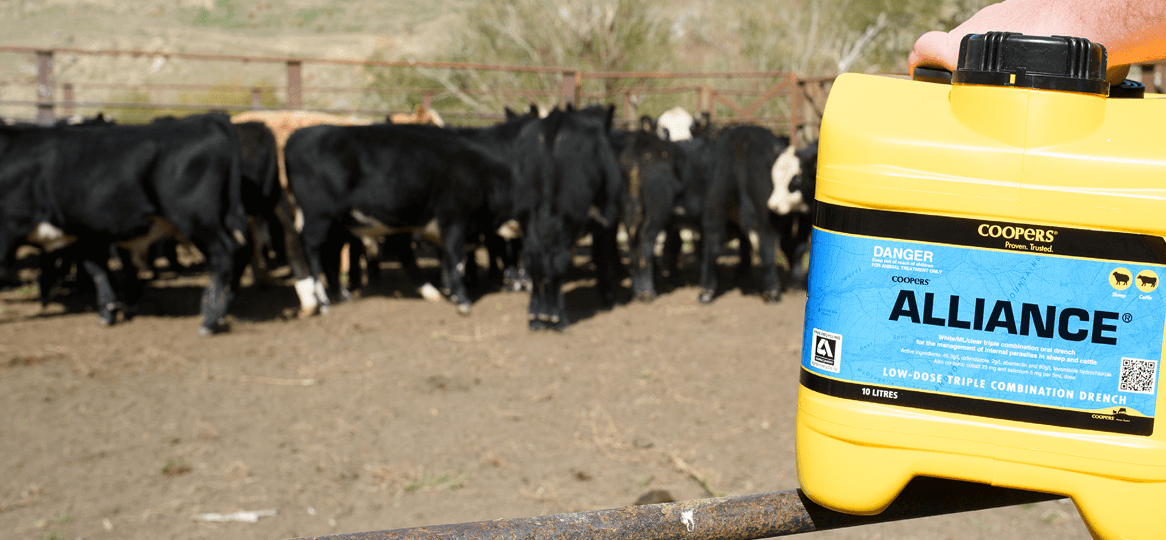 Cattle Oral Drench