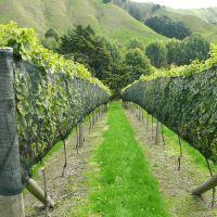 Vine Side Netting
